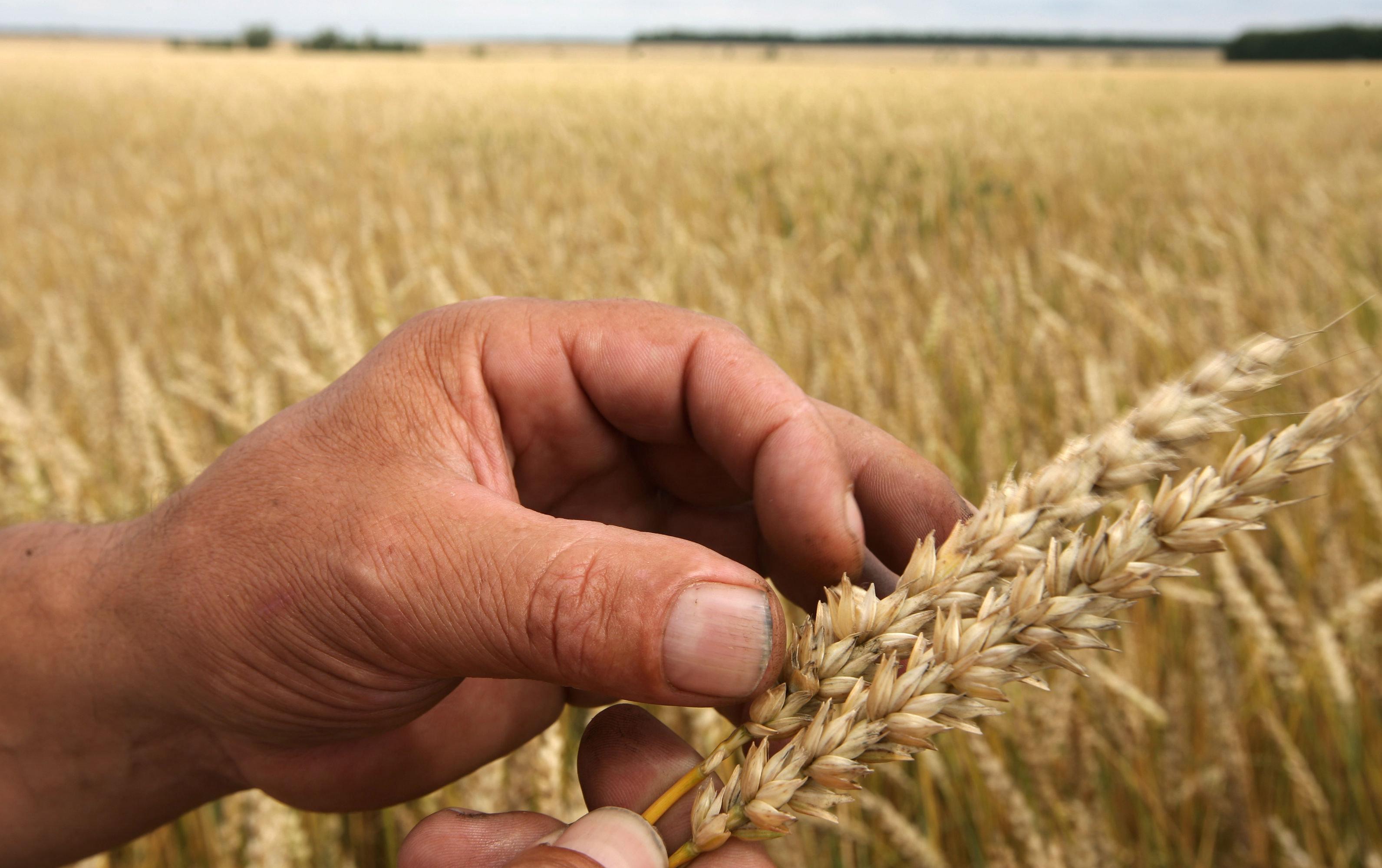 Пшеничные войны: Америка проигрывает России
