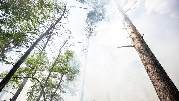 СМИ: в Канаде эвакуируют жителей еще одной провинции из-за лесных пожаров
