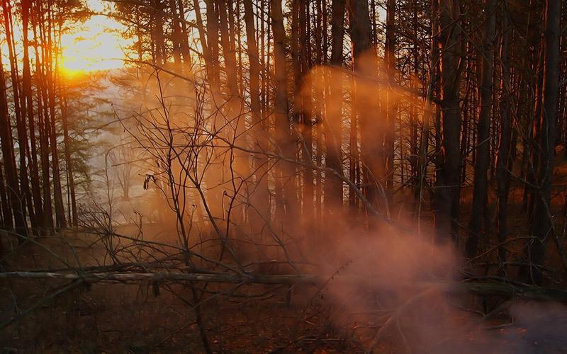 Вчетырех районах Брянской области ввели особый противопожарный режим