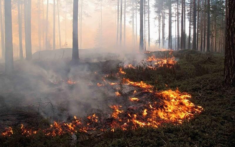 В Брянском районе сгорело полгектара леса