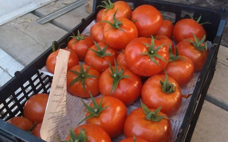 В Брянской области уничтожат 19,5 тонны задержанных томатов