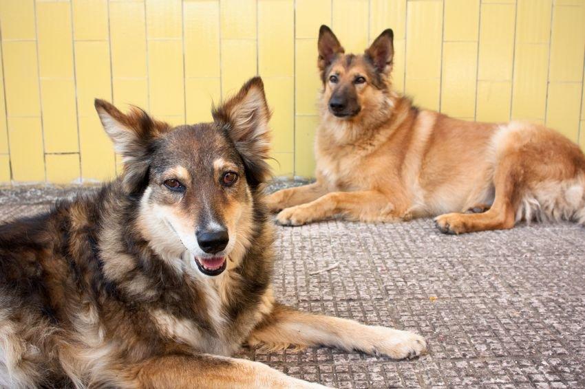 В Воронеже бездомных собак и кошек отправят в университет