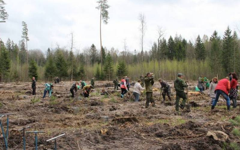 В Брянской области посадили более 170 тысяч деревьев