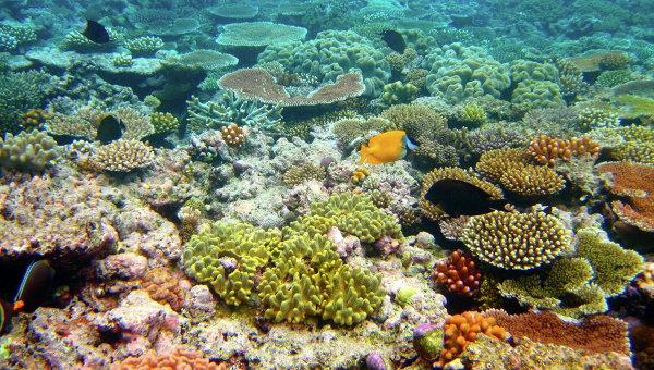 Таиланд закрыл для туристов три острова из-за разрушения кораллов