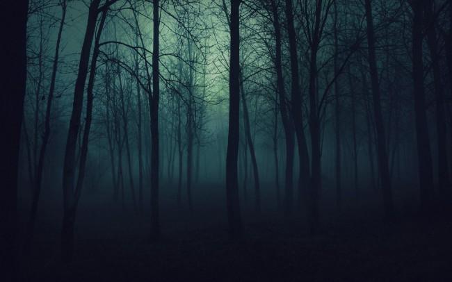 Спят ли деревья по ночам?