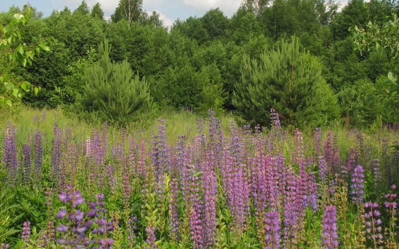 Новозыбковская администрация оставила безконтроля почти 500 гектаров леса