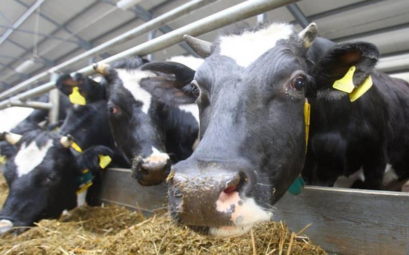 В Почепском районе после обращения экологов приостановлена деятельность животноводческого хозяйства