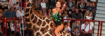 Жираф шоу | Цирк больших зверей