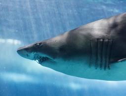 На египетском курорте акула убила туриста из Чехии