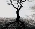 Деревья умирают стоя | Томский областной Театр Драмы