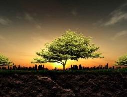 Десятилетнее исследование позволило подсчитать массу подземной экосистемы Земли