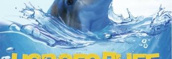 В Новый год по Млечному пути | Дельфинарий