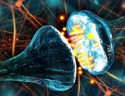 В головном мозге открыт физиологический процесс, который искали более 100 лет