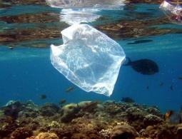Создан биоразлагаемый пластик, при производстве которого вообще нет отходов