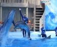 Дельфиния | Цирковое шоу с морскими млекопитающими
