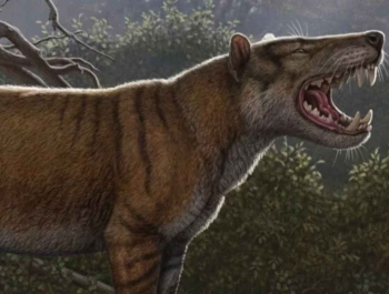 Открыт новый вид древних «кошек», которые были крупнее белых медведей