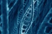 Найдены вариации генов, защищающие от ожирения и сахарного диабета
