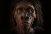 Исследование раскрыло новую причину эволюционного изменения человеческого лица