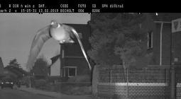 Дорожная камера зафиксировала превышение скорости голубем