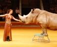 Гиганты Африки | Цирк больших зверей