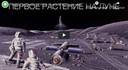 Первое растение на Луне и другие новости высоких технологий