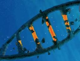 CRISPR стал мощнее, благодаря «выключателю»