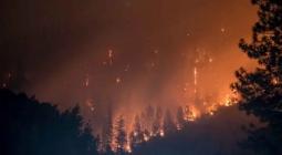 Создано средство для предотвращения лесных пожаров. Как оно работает?