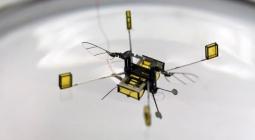 Первая робопчела совершила свой экспериментальный полет