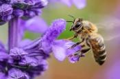 Как линии электропередач влияют на поведение пчел?