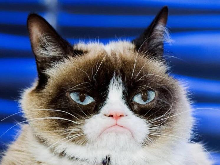 Умеют ли кошки двигать мышцами лица и выражать эмоции?