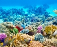 Коралловый риф. Экспедиция по спасению
