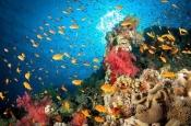 Океаны очень быстро теряют кислород. Чем это опасно?