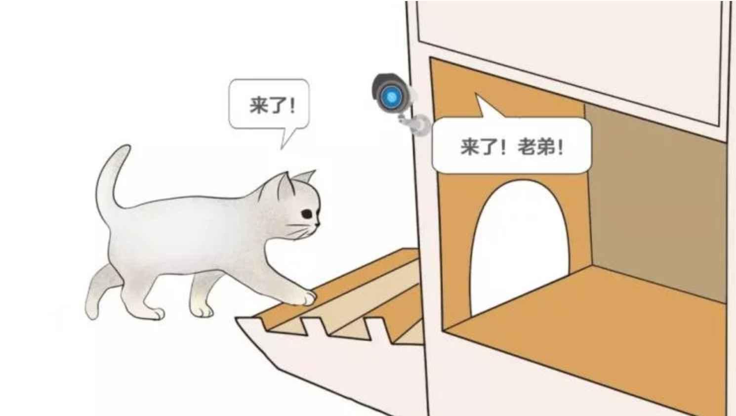 В Китае создали «умный» приют для бездомных кошек