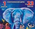 Шоу слонов | Большой Варшавский цирк