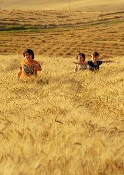 Пшеничное море