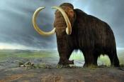 Ученые «воскресили» гены мамонтов