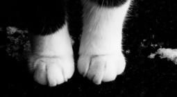 Почему в мире так много кошек с белыми лапами?