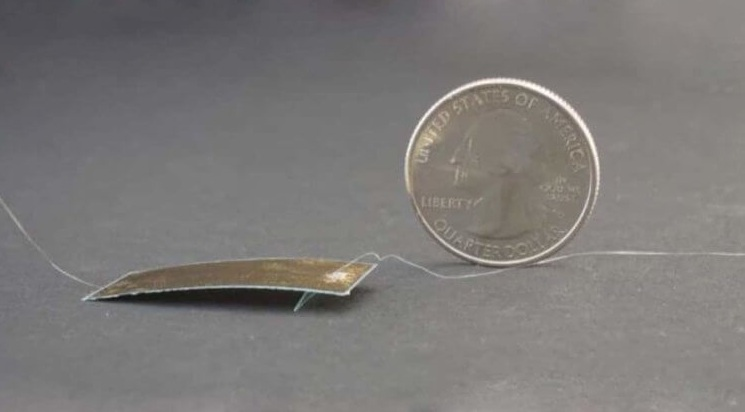 Создан робот-таракан, которого почти невозможно раздавить