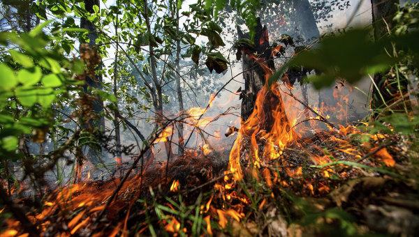 В Канаде из-за лесного пожара эвакуировали около 500 человек
