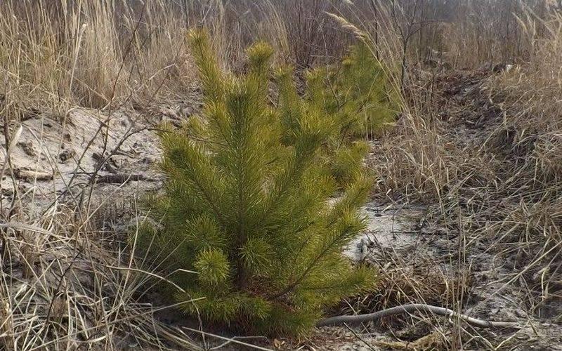В Брянской области лесовосстановительные работы выполнены почти на70%