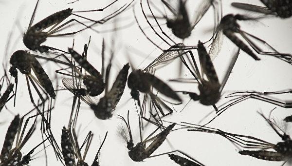 В Южной Корее выявили третий случай заражения вирусом Зика