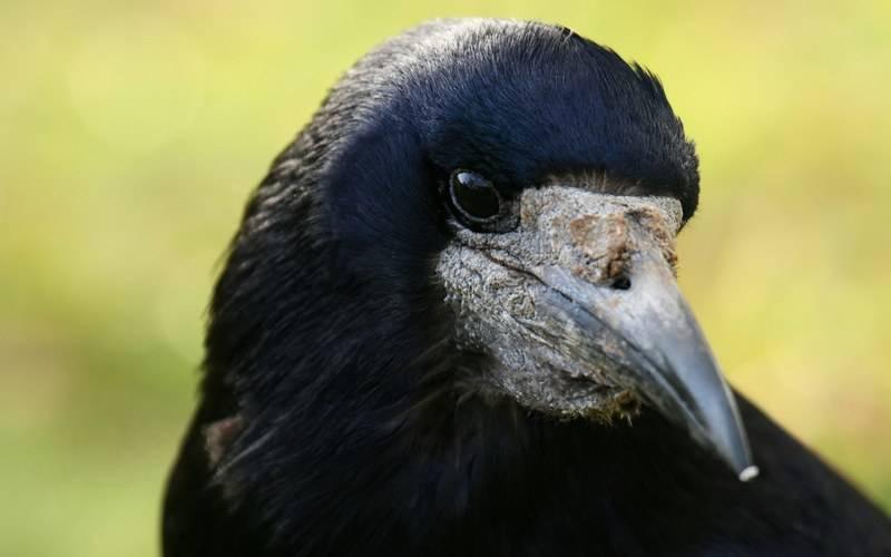 В Клинцах против кладбищенских птиц применили водометы