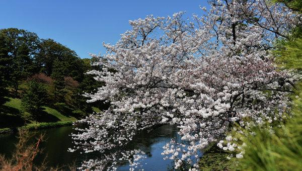 СМИ: Верховный суд Японии поддержал очередной смертный приговор