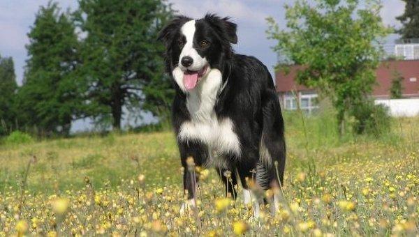 Собака прошла почти 400 километров, чтобы вернуться в родной дом