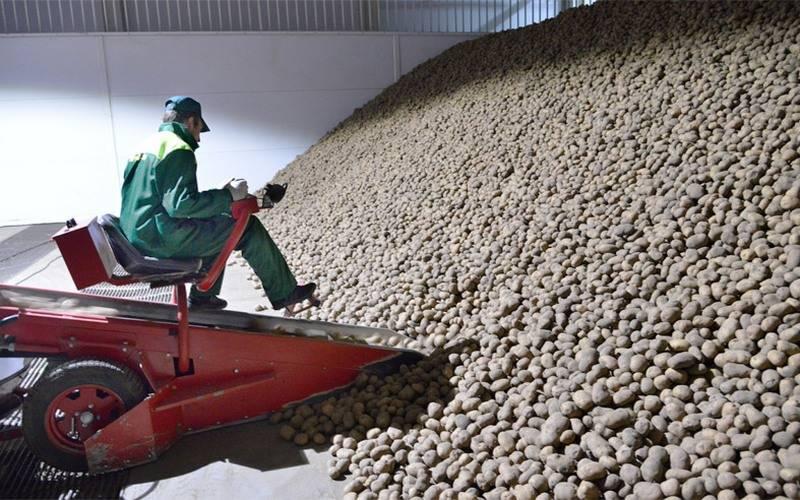 Брянская область вошла втройку лидеров попроизводству картофеля