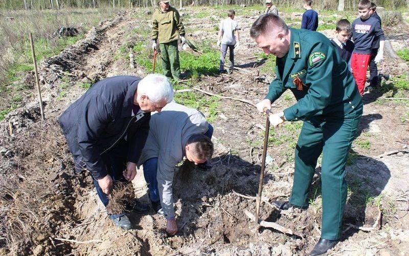 В Брянской области задва месяца посадили 2,6 тысячи гектара леса