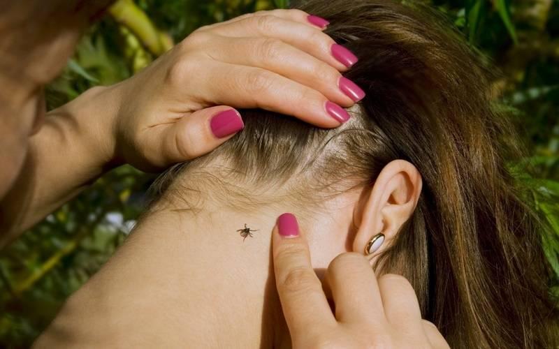 В апреле кбрянским медикам сукусами клещей обратились 15 взрослых иребенок