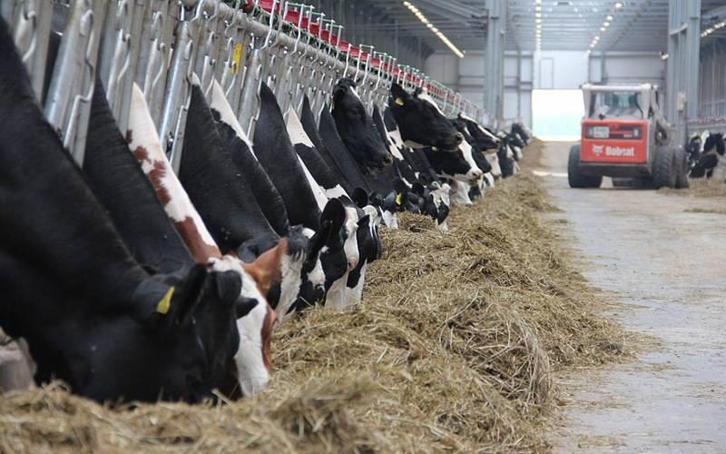 В Красногорском районе планируют построить ферму на800 голов КРС