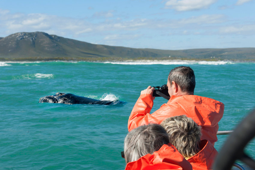На Сахалине туристы смогут наблюдать за серыми китами