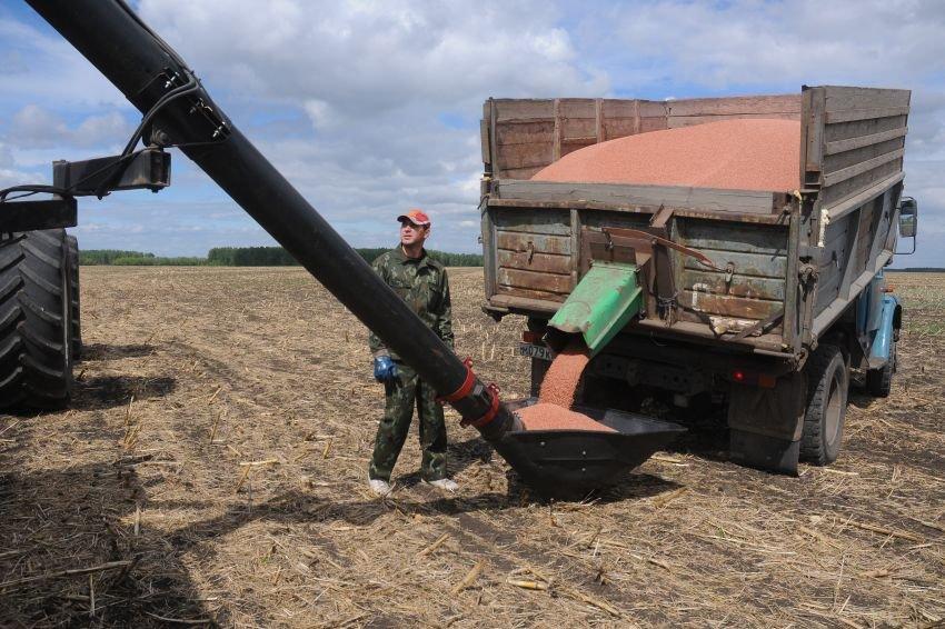 Сибирские аграрии будут поставлять пшеницу в Китай